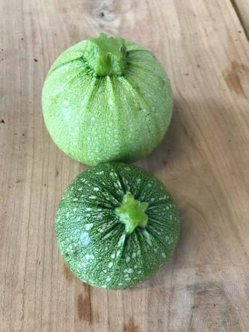 courgettes_rondes_maupitet